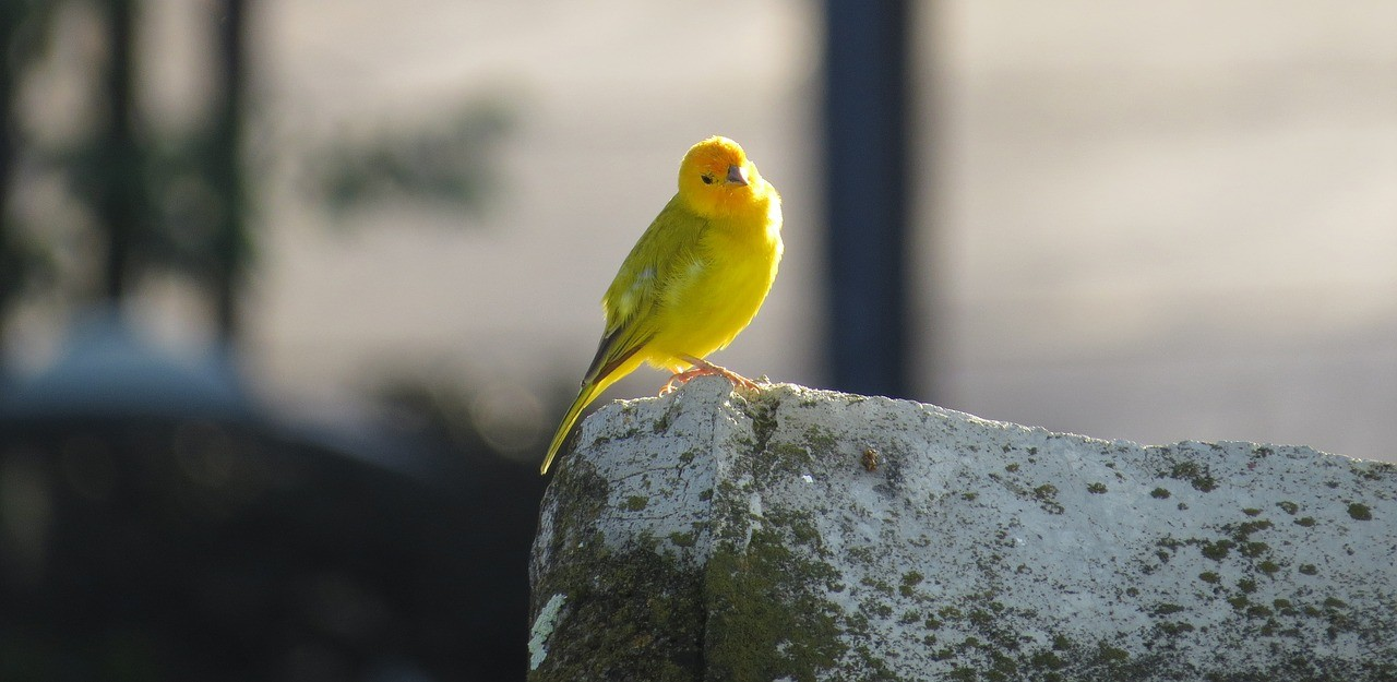 "Your ""stress canaries"" and how to take care of them"